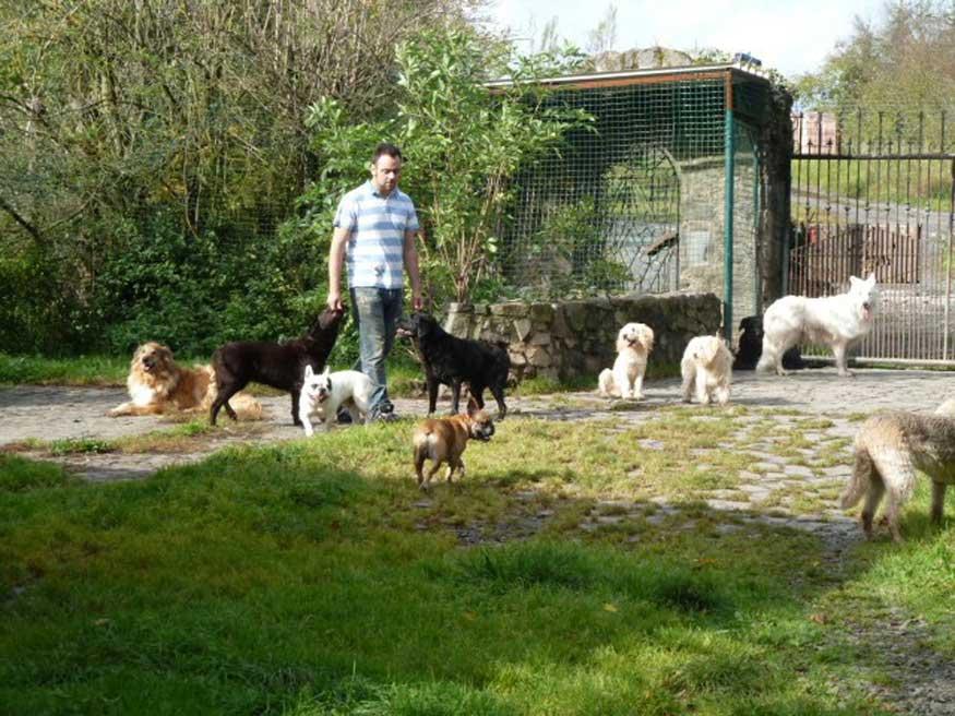 Bild Benjamin hat fast jeden Tag andere Hundefreunde