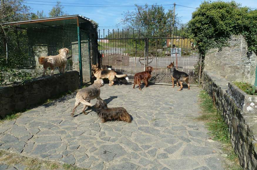 Bild Hunde warten hinter Zaun auf Benjamin