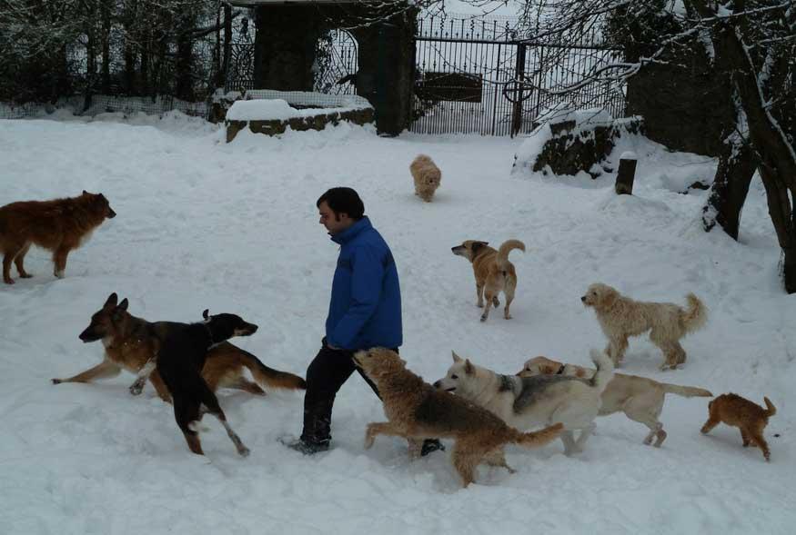 Bild Hundeurlaub Winter