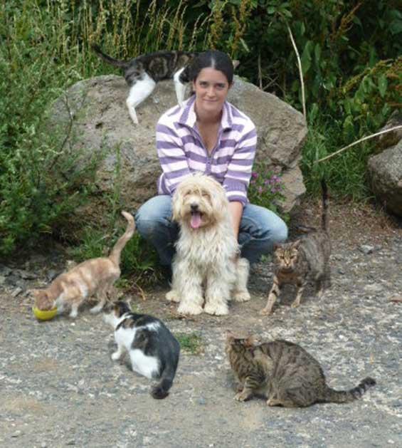 Bild Schifamhund und Katzen in Harmonie