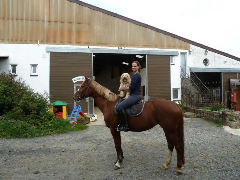 Bild Schifamhund auf Pferd