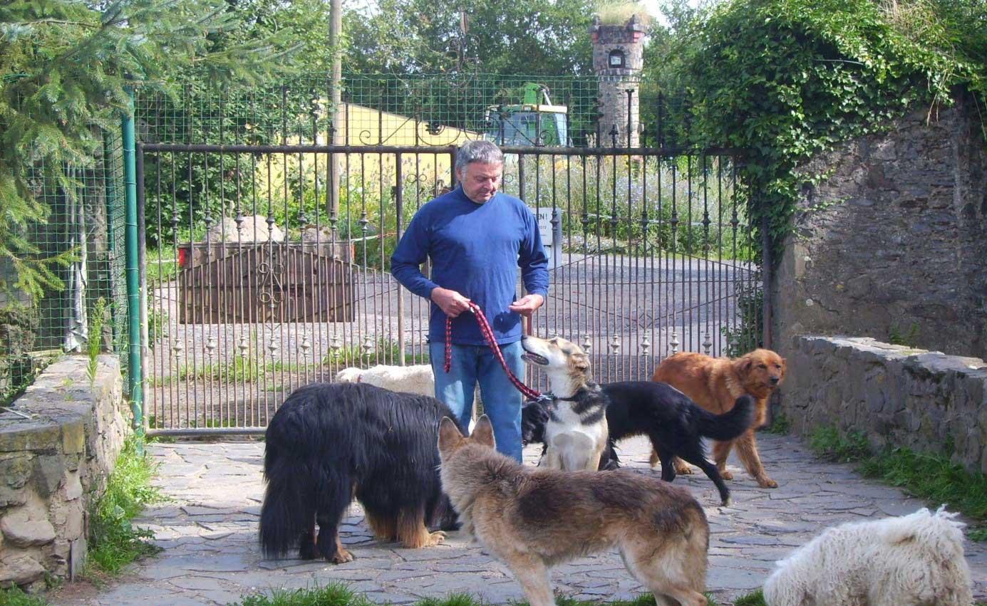 Bild Züchter Schiener bringt Schäferhund-Collie-Mischlingsrüden die Rudelordnung bei