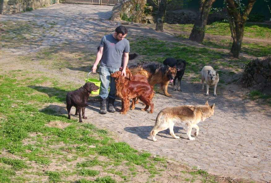 Bild Hunde bekommen Streicheleinheiten