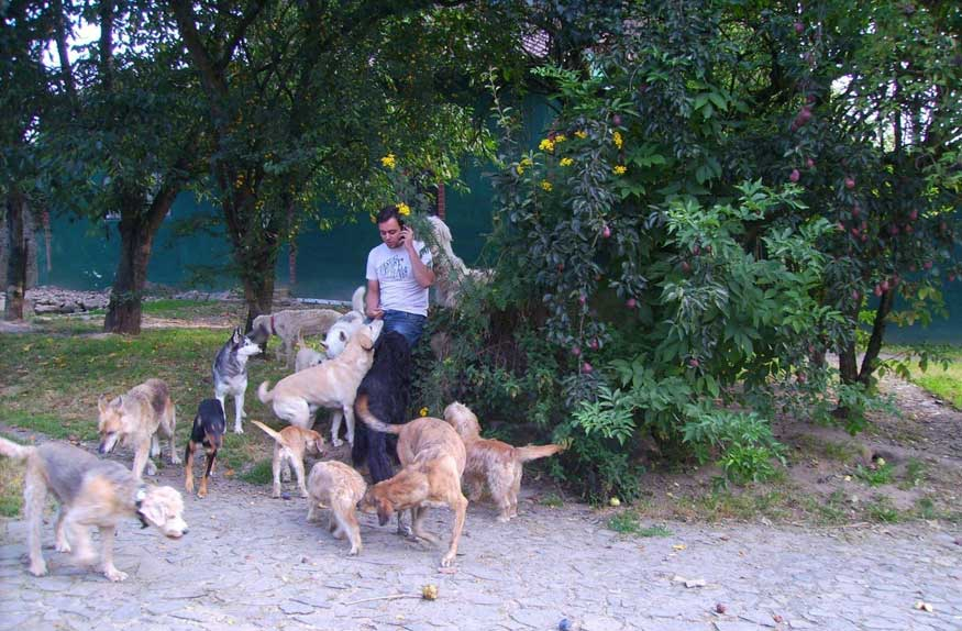 Bild Benjamin telefoniert und die Hunde hören aufmerksam zu
