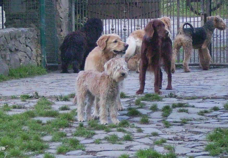 Bild wachsame Hunde