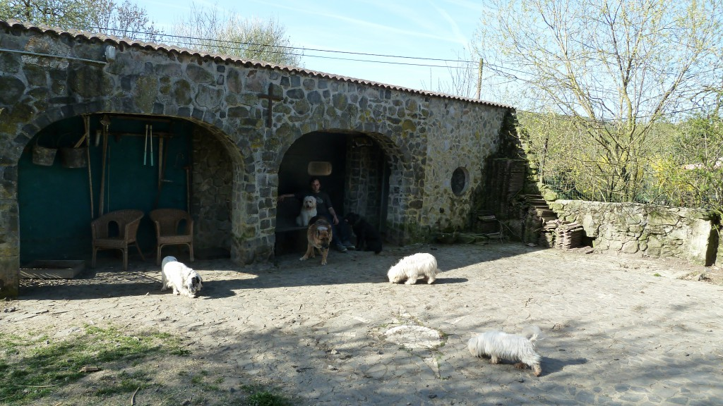 """Schifamhund """"Max"""" und Benjamin machen Pause und beobachten die anderen Hunde. Benjamin übt dabei mit ihm das Ruhigsitzenbleiben (trotz der anderen freilaufenden Hunden)."""