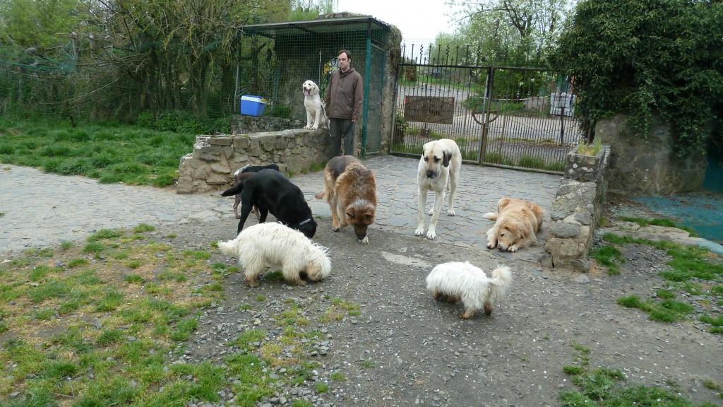 """""""Schneemann"""" auf der Mauer. Das """"ruhig auf der Mauer bleiben"""" ist eine wichtige Gehorsamübung > denn Hunde mögen i.d.R. keine erhöhten und schmalen Flächen > zudem bekommen sie dadurch auch Vertrauen zum Hundeführer, der auch in schwierigen und ungewöhnlichen Momenten für sie da ist."""